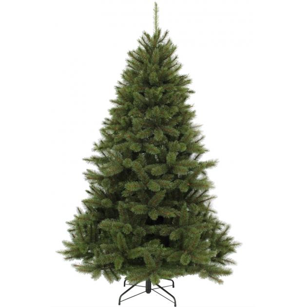 Triumph Tree Пихта Прелестная зеленая 1.2