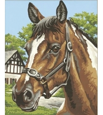 Раскраска по номерам Schipper Лошадь 9240381