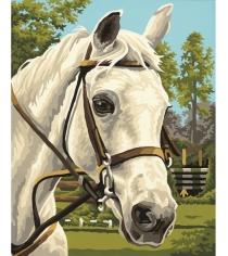Раскраска по номерам Schipper Белая лошадь 9240394