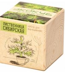 Набор выращиваем растения Экокуб лиственница артикул ECB-01-07