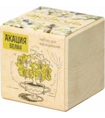 Набор выращиваем растения Экокуб акация артикул ECB-01-10