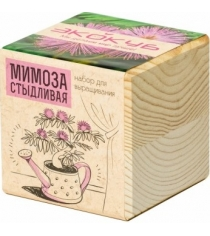 Набор выращиваем растения Экокуб мимоза артикул ECB-01-15