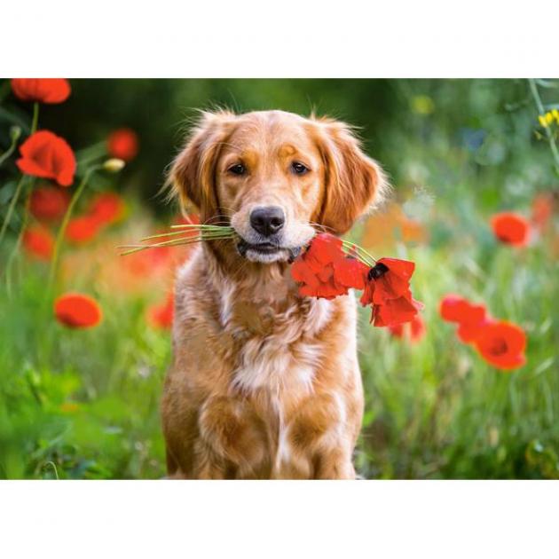 Пазл цветы для вас 180 элементов Castorland Р83077