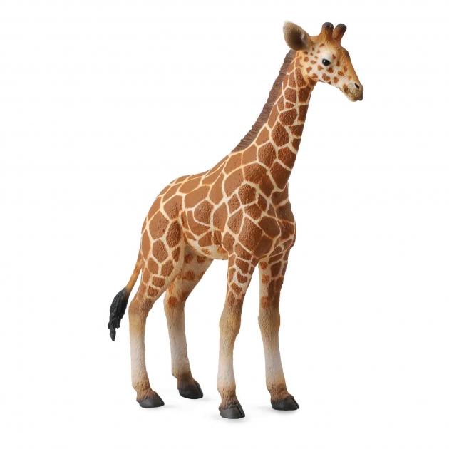 Жеребенок сетчатого жирафа l Collecta 88535b