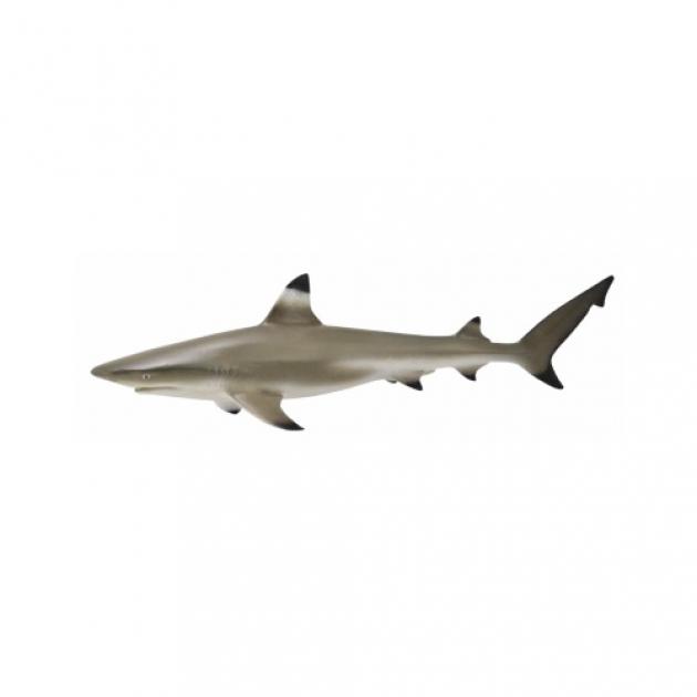 Рифовая акула m Collecta 88726b