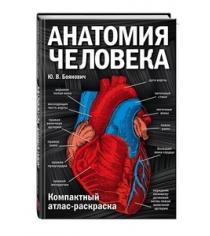 Анатомия человека компактный атлас раскраска Боянович Ю.В.