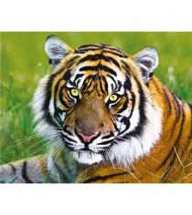 Trefl тигр 500 деталей 37192N