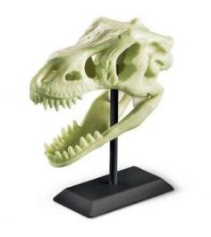Палеонтологический музей 4M 00-03356...