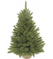 Триумф Лесная красавица в мешочке Triumph Tree 60 см...