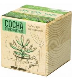 Набор выращиваем растения Экокуб сосна артикул ECB-01-09...