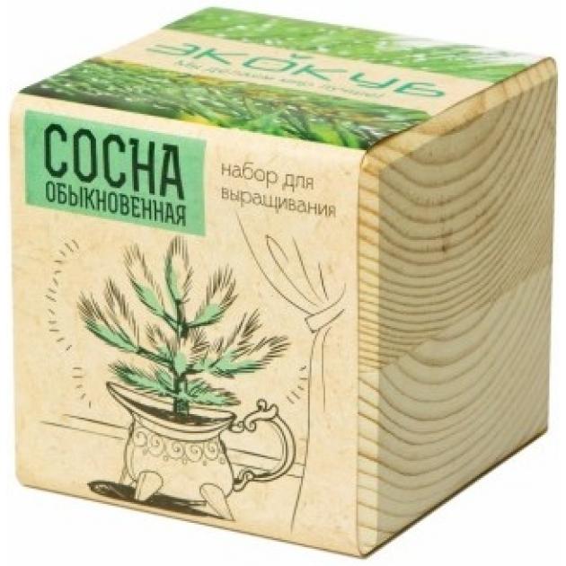 Набор выращиваем растения Экокуб сосна артикул ECB-01-09